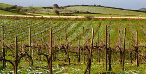 Bodegas Menorquinas – Es Mercadal